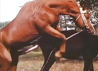 Muscled brown stallion is fucking a horse