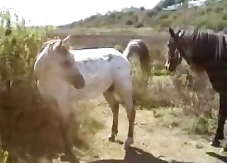 Two horses fucking outdoors, enjoy