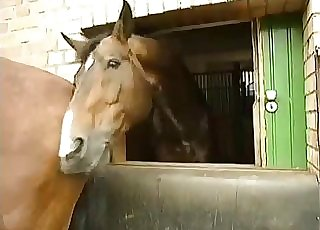 Horses being extremely spectacular on web cam
