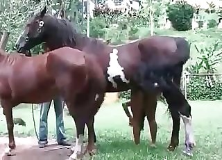 Horny young horses in the amateur bestiality action
