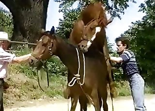 Old man watching two horses fuck hard
