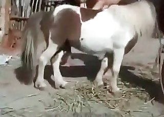 Young girl is masturbating a small pony cock